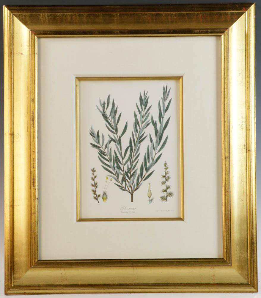 Group Of 3 Framed Botanical Prints