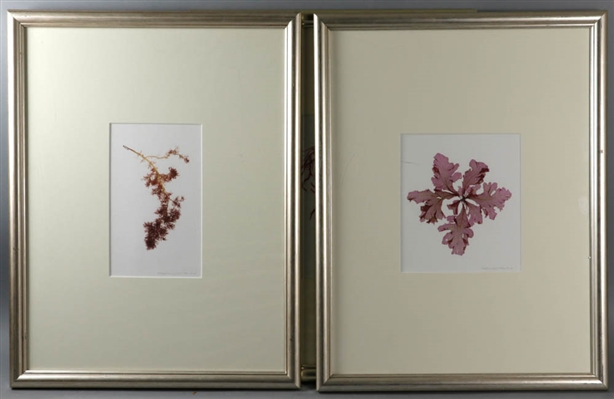 Limited Edition Prints Depicting Seaweed