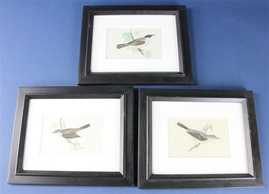 Antique Ornithological Engravings