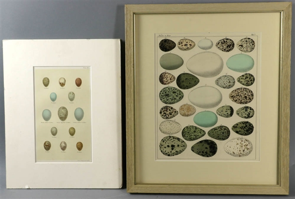 Two Antique Lithographs of Birds Eggs