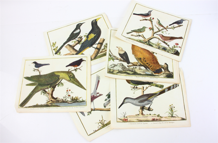 (15) 18thC Hand Colored Engravings of Birds