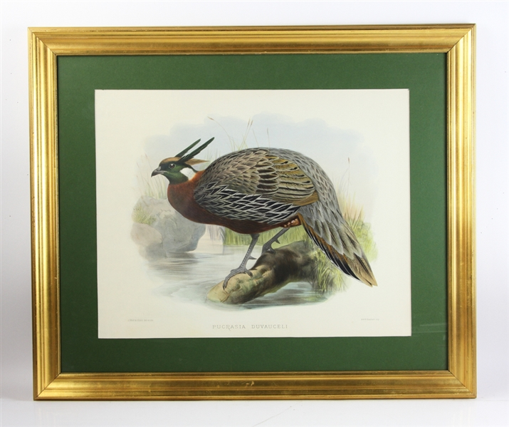 19thC Hand Colored Lithograph, Pucrasia Duvauceli